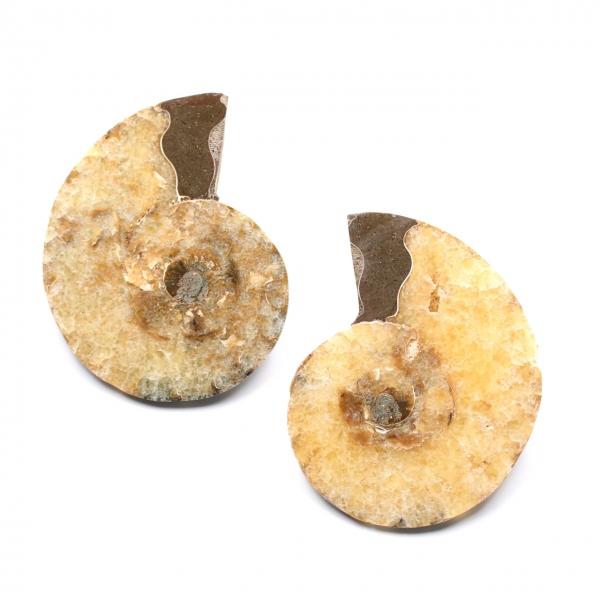 Dubbel gezaagd en gepolijst ammonietfossiel