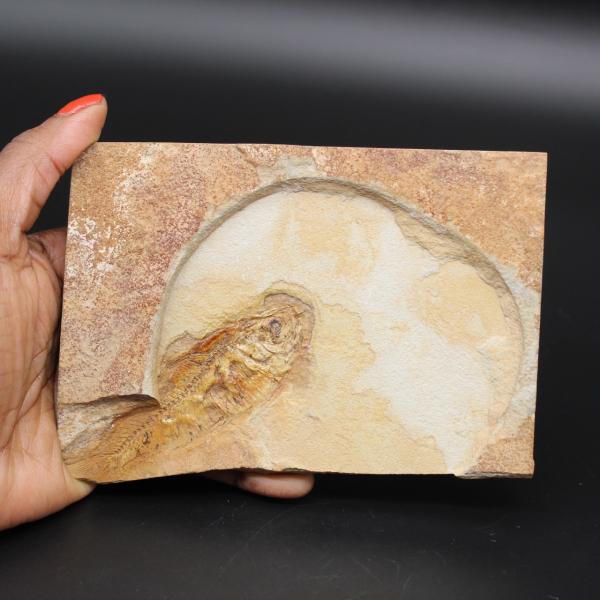 Vis fossiel